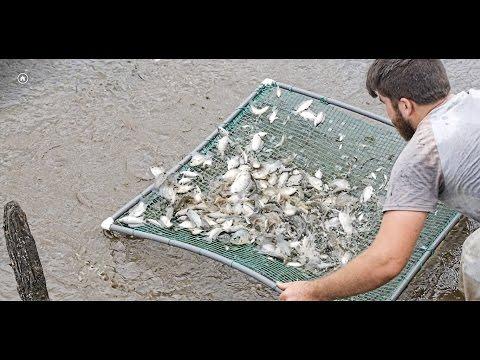 Netting fish in Costa Rica!/Vlog#7