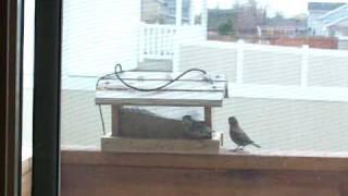 Birds Eating Again In The Bird Feeder