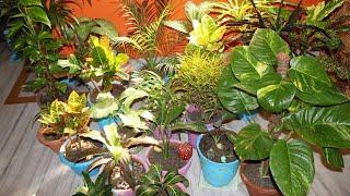 घर मे बनाये Indoor Garden ...(Indoor Garden overview)