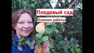 Плодовый сад: осенние работы. Чем и как подкормить деревья, чем опрыскать плодовые, обрезка.