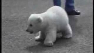 Маленький мишка(маленький белый медвежонок., 2009-10-03T11:20:18.000Z)