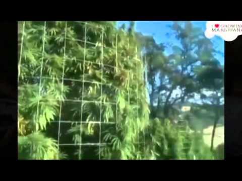 Smellington Piff - Gorilla Growers feat. Son Doobie, BVA and Leaf Dog (VIDEO) Prod. Leaf Dog