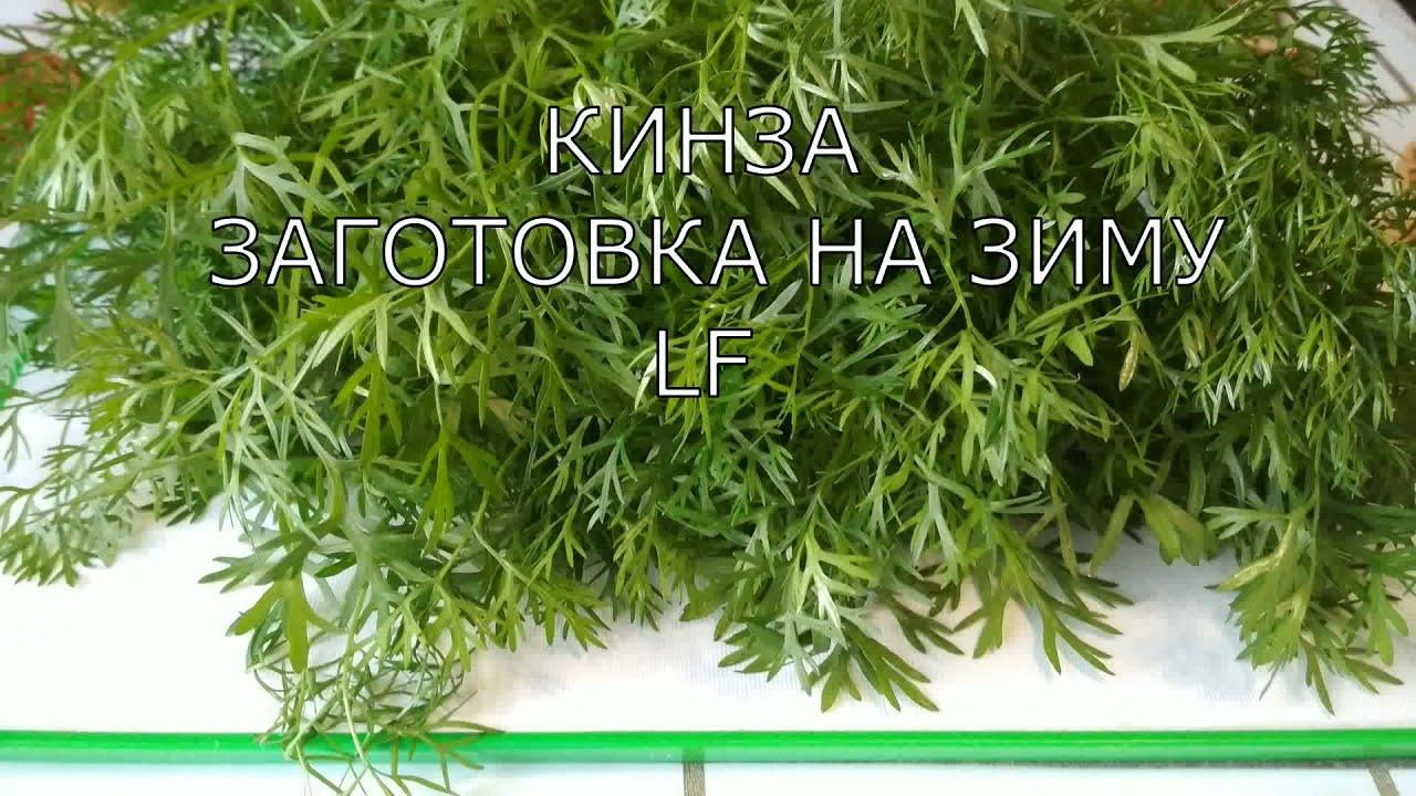 Кинза на зиму - пошаговый рецепт с фото на Повар. ру