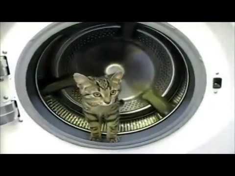 Кошки и собаки. 1. Смешно. cats and dogs. funny