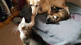 Puppy Ignoring Cats | Cats Curious about New Puppies | First Time Watching TV
