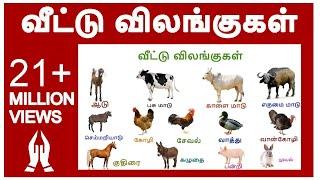 வீட்டு விலங்குகள் (NEW)|  Learn Tamil farm animals name video for kids and children in Tamil