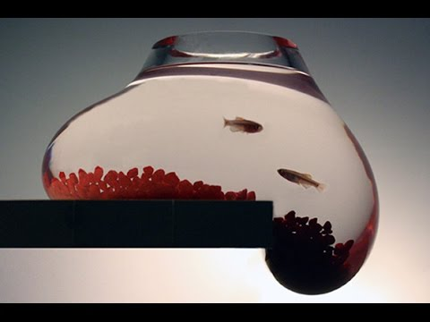 Bold test: goldfish swim in new non-toxic resin