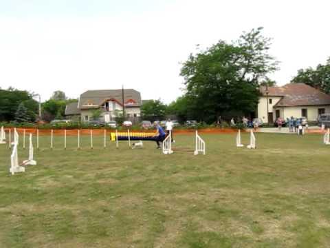 Hertelendy Melinda és Sunny - Smaragd kupa - zsenge jumping II.