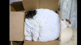 30 Cats Who Have Mastered The Art Of Sleep-Fu | Boredpanda | sleeping cat compilation 2014