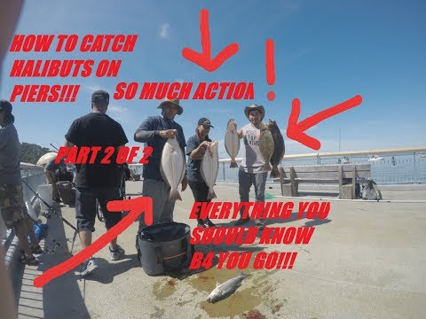Paradise Pier California: HOW TO CATCH HALIBUT. (IN ACTION!) PART 2 OF 2 (WE ATE LIVE ANCHOVIES !??)