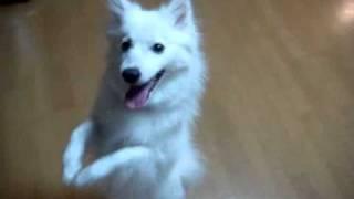 うちの犬 ♀ 今年で5歳になります.