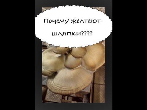 Съедобные грибы Приморского края – фото и описание