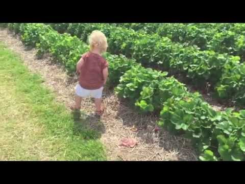 CARNIVAL,FOOD FESTIVAL & STRAWBERRY PICKING!