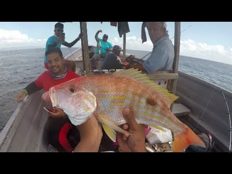 HAND LINE & ROD FISHING DEEP IN THE GULF OF PARIA - Trinidad & Tobago, Caribbean