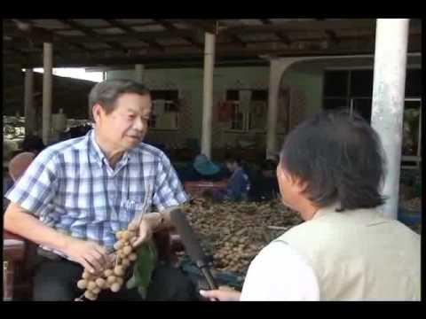 Kỹ Thuật Trồng Và Chăm Sóc Cây Nhãn Thái Lan