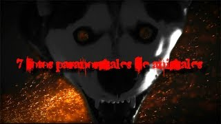 TOP 7: Las fotos paranormales de animales más aterradoras