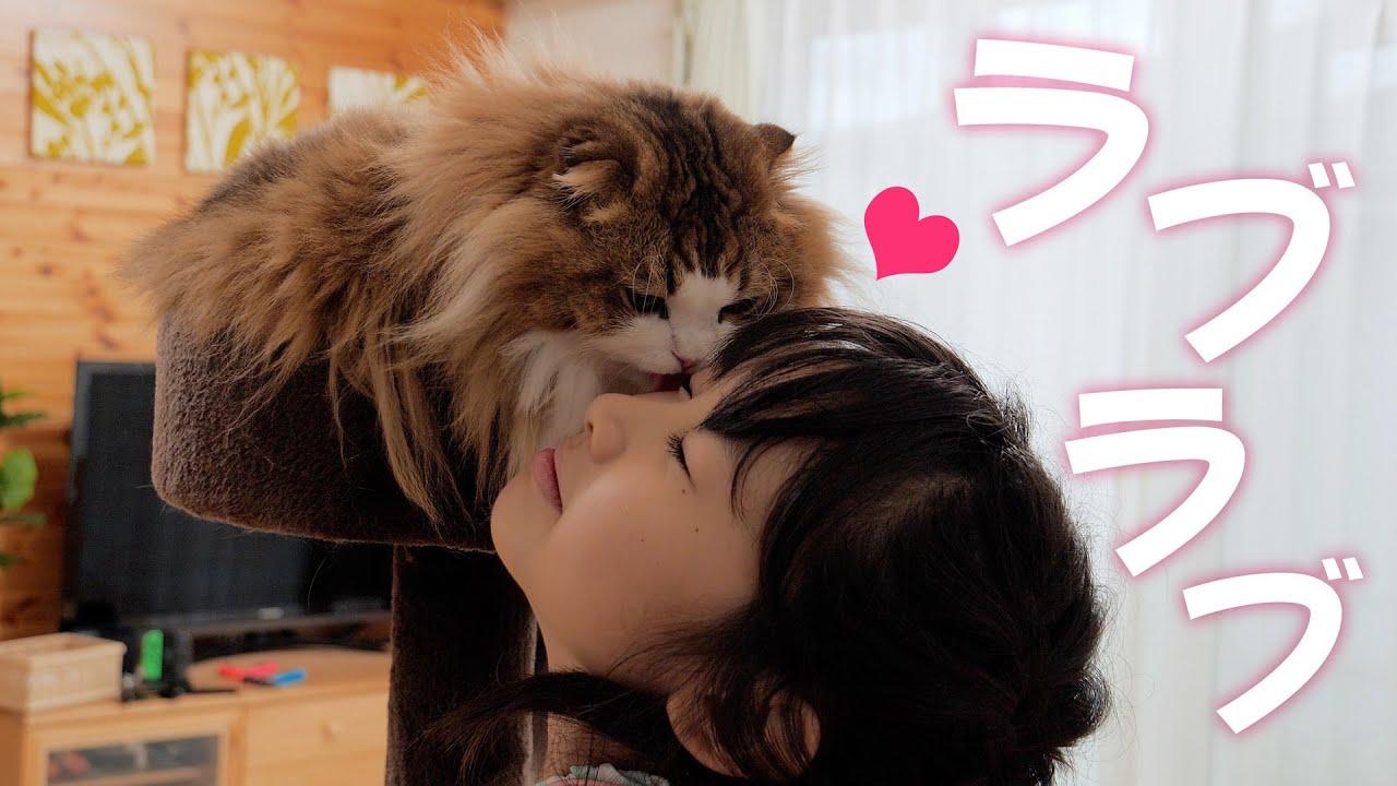猫と娘の愛の形はこんな感じ。