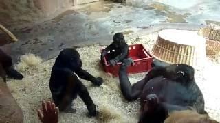 Приколы с обезьянами//Зоопарк в Праге