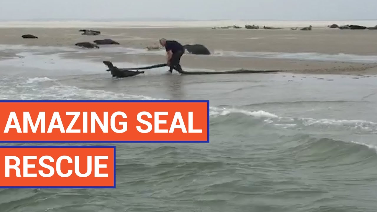 Kind Man Saves Seal | Daily Heart Beat Animal Rescue 2016