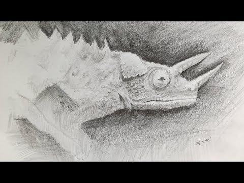 Рисунок Хамелеона  - как нарисовать Хамелеона?