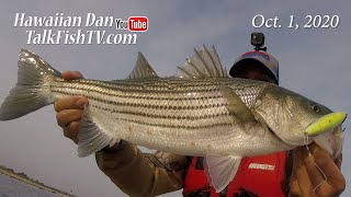 Fall Season Fish Feeding Frenzy How To Catch Them Fishing Report Oct 1 2020 TalkFishTV com