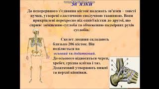 Опорно- рухова система людини. Уроки біології! Корисні теми ЗНО.