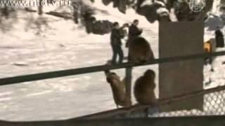 Обезьяны веселят посетителей горы Эмэйшань в КНР