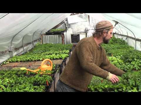 An Urban Farm: Voss Organics