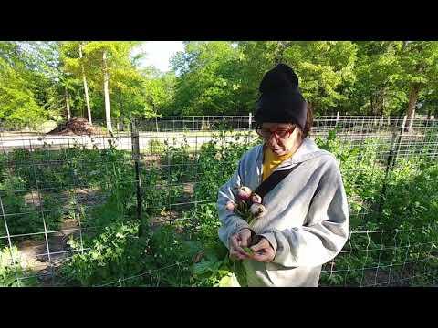 Eating in Season -English Peas and Turnips