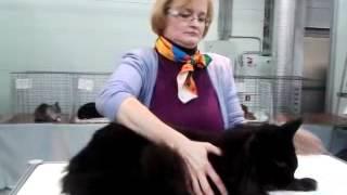 Мейн- Кун 9,5 месяцев 9 кг