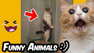 Funny Cats Compilations - Funny Video of Animals 😆😆