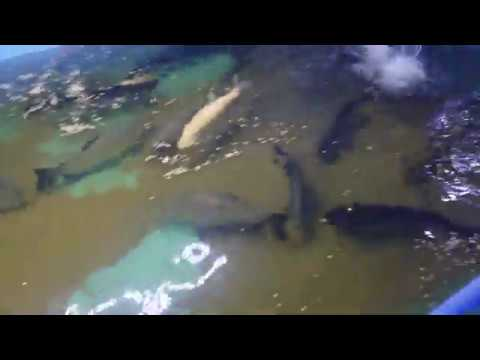 Video Tour Of Angry Fish Sales. Tropical Fish United States