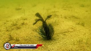 Z-Man Palmetto Bug Underwater Video