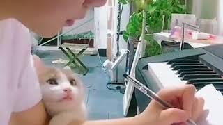 Кот просится на руки и внимания с улыбкой на мордочке — прикольное видео