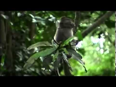Spirit of the Rainforest (David Arkenstone) - Two Rivers