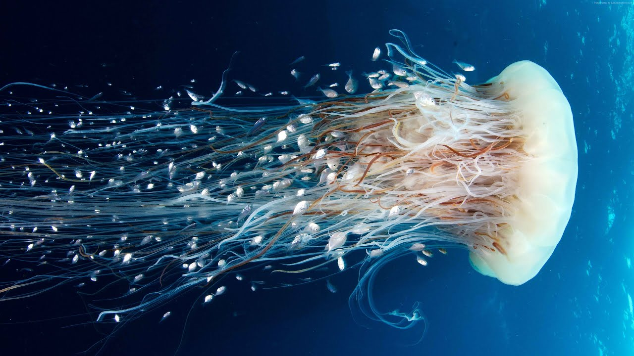 Download Beautiful And Amazing Aquatic Life Wallpapers UHD 4k