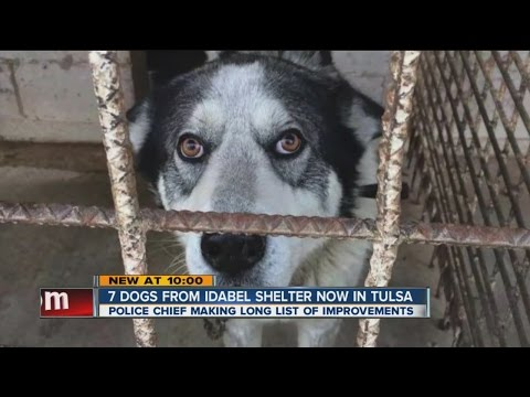 7 Idabel Shelter Dogs Now In Tulsa