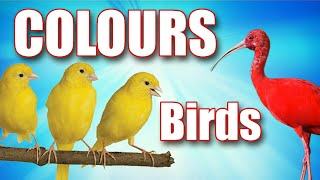 Learn Colors with Birds in English with Skillful Libro Book |Brainy Taco, Wacky Yip, Elite Boris