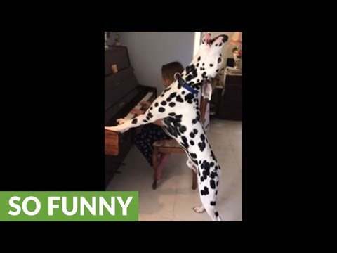 Musically Inclined Dog Loves Showing His Singing Talent