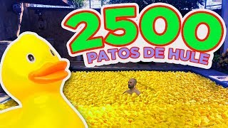 LLENAMOS UNA PISCINA DE PATITOS DE HULE - LOS RULES - JORGE ANZALDO - DIEGO CARDENAS