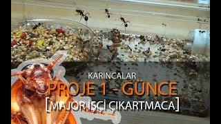Gambar cover Canlı Yemle Karınca Besleme - Proje 1 Koloni