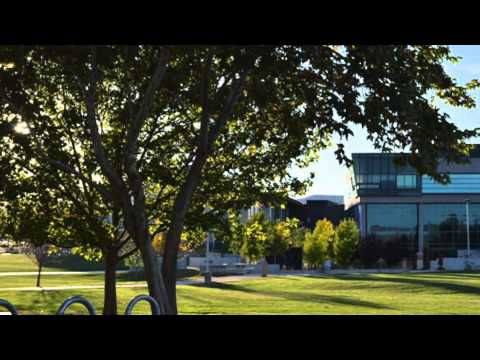 Bill's Daily News: Tree City USA
