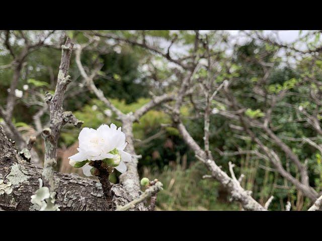 Tsushima Island Getaway Day 6 - Scenery