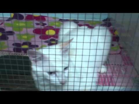 Meows Adoption Day - Doha