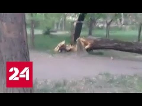 """""""Погода 24"""": циклон с Востока идет вглубь страны - Россия 24"""