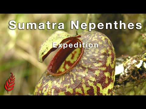 Sumatra Nepenthes Expedition