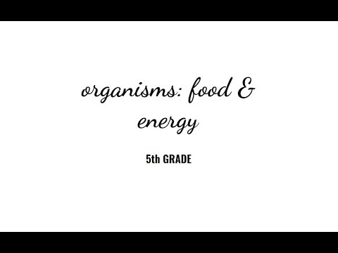 Grade 5. #3. 5-PS3-1 & 5-LS1-1. Study Island 3a. Topic- ORGANISMS: FOOD and ENERGY