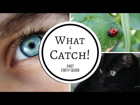 What a Catch! Part 47 (A Miraculous Ladybug Fanfiction)