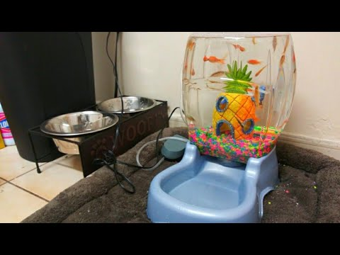 DOG BOWL Fish AQUARIUM! DIY