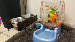 dog-bowl-fish-aquarium-diy